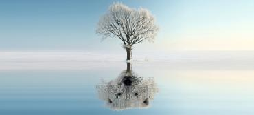A solitary white tree in a stark landscape standing above water, with the face of a bear revealed in the tree's reflection.